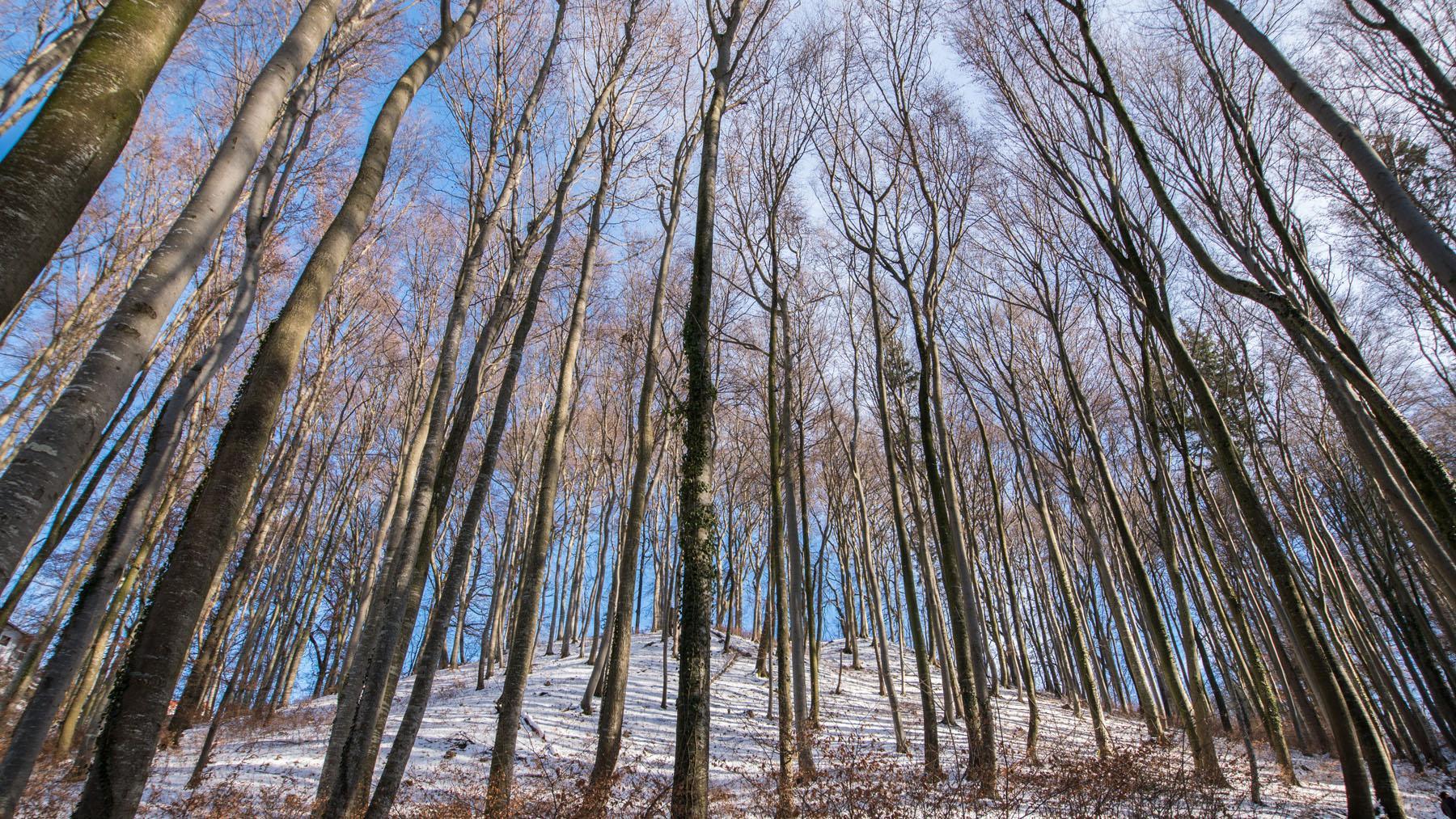Wald.2