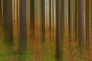 11. Platz: Der verzerrte Wald, Andreas Bödiger